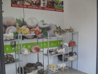 Pilze in allen Farben und Formen – das kam bei den Besuchern sehr gut an.