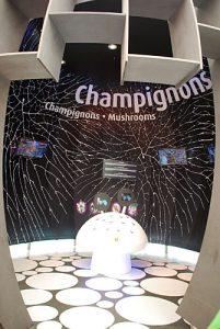 Reaktionsspiel mit Champignons, das vor allem die jüngeren Besucher anspricht