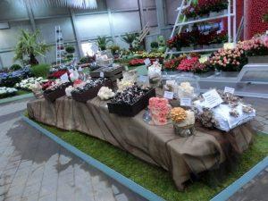 Die Schau der Pilze in der Hamburger Blumenschau