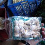 Champignons aus heimischer Produktion