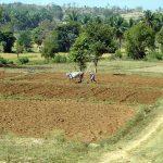Der Einsatz von Maschinen macht auf den kleinen Feldern keinen Sinn