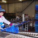 Der ab 1. Januar 2015 gültige Mindestlohn von 8,50€ ist auch für viele Pilzproduzenten problematisch