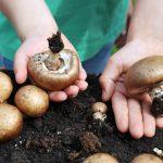 Pilze in Echtzeit wachsen sehen und auch mal anfassen – das bietet das Schulprojekt des BDC.