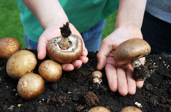Kleine Hände und große Pilze – die BDC-Schulaktion löst bei Klein und Groß Begeisterung aus.