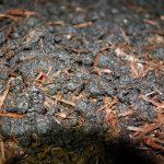 Champost ist kein Abfallstoff der Champignonproduktion sondern ein wertvoller Rohstoff.