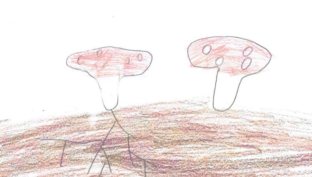 Das Pilzbild mit dem deutlich erkennbaren Mycel malte ein leider unbekannter kleiner Künstler als Dank für den BDC.
